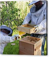 Two Beekeepers Removing The Feeder Tray Acrylic Print