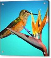 Two Birds Of Paradise Acrylic Print