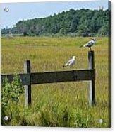 Two Birds On A Fence Acrylic Print