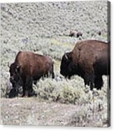 Two Bison Acrylic Print