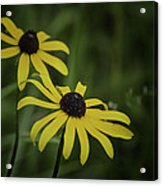 Two Black Eyes On The Macomb Orchard Trails Acrylic Print