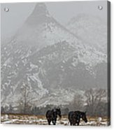Two Black Horses In The Snow   #7983 Acrylic Print