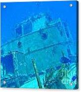 Two Blue Tang On A Ship Wreak Acrylic Print
