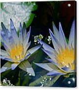 Two Blue Water Lilies Acrylic Print