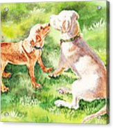 Two Brothers Labradors Acrylic Print