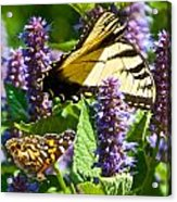 Two Butterflies In The Afternoon Sun Acrylic Print