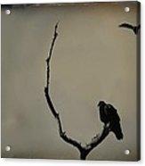Two Buzzards Acrylic Print