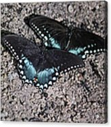 Two By Two Acrylic Print
