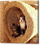 Two Cats In A Condo Acrylic Print