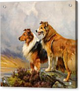 Two Collies Above A Lake Acrylic Print