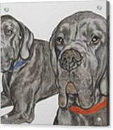 Two Cool Danes Acrylic Print