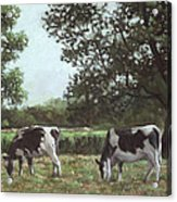 Two Cows In Field At Throop Dorset Uk Acrylic Print
