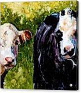 Two Cows Acrylic Print