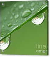 Two Droplets Acrylic Print