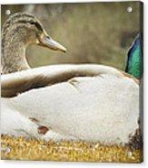 Two Ducks Acrylic Print