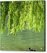 Two Ducks On Pond Acrylic Print