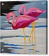 Two Flamingo's In Acrylic Acrylic Print