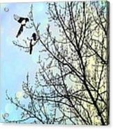 Two For Joy Acrylic Print by John Edwards