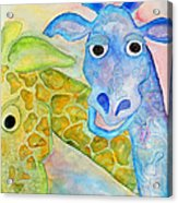 Two Giraffes Acrylic Print by Shannan Peters