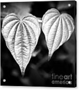Two Hearts Acrylic Print