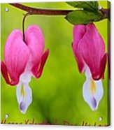 Two Hearts Valentine's Day Acrylic Print