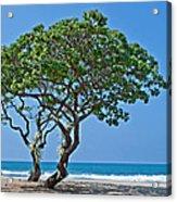 Two Heliotrope Trees On Tropical Beach Art Prints Acrylic Print