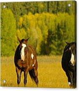 Two Horses Walking Along Acrylic Print