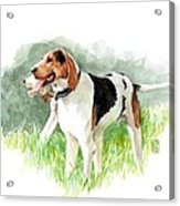 Two Hounds Acrylic Print