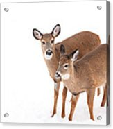Two In The Snow Acrylic Print