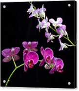 Two Kind Of Orchid Flower Acrylic Print