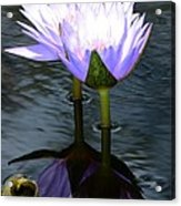 Two Lilies And A Heart Acrylic Print