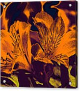 Two Lilies Gradient Ink Outline Acrylic Print