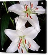 Two Lilies Acrylic Print