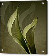 Two Lilly Fantasy Acrylic Print
