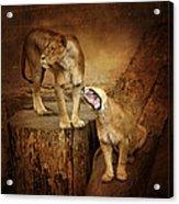 Two Lions Acrylic Print
