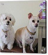 Two Little Dog Acrylic Print
