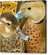 Two Little Ducks Acrylic Print