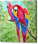Two Macaws Acrylic Print