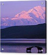 Two Moose Kiss In Wonder Lake Acrylic Print