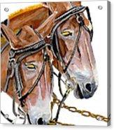 Two Mules - Enhanced Color - Farmer's Friend Acrylic Print