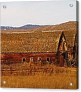 Two Old Barns Near Thorp  Wa Acrylic Print