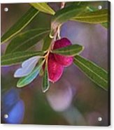 Two Olives Please Acrylic Print
