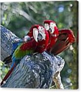 Two On A Branch Two Acrylic Print