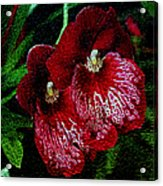 Two Orchids Acrylic Print by Elizabeth Winter