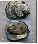 Two Oysters Acrylic Print