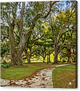 Two Paths Diverged In A Live Oak Wood...  Acrylic Print