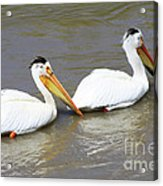 Two Pelicans Acrylic Print