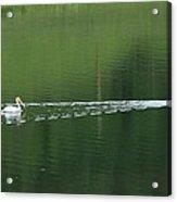 Two Pelicans On Lake Acrylic Print