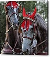 Two Red Devils Acrylic Print