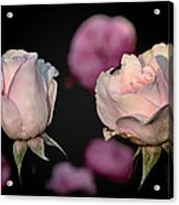 Two Roses And A Fly Acrylic Print by Tomasz Dziubinski